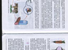 page8636-img990m.jpg